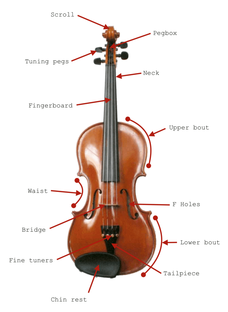 Parts of a String Instrument